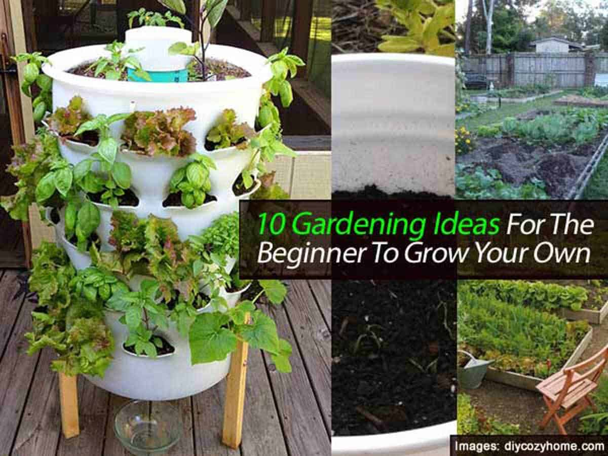 10 Gardening Ideas for the Beginner To Grow Your Own