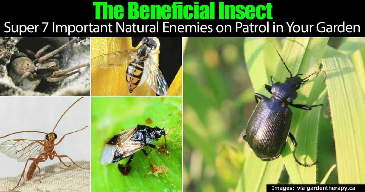 Super 7 Beneficial Insects Natural Enemies Patrolling
