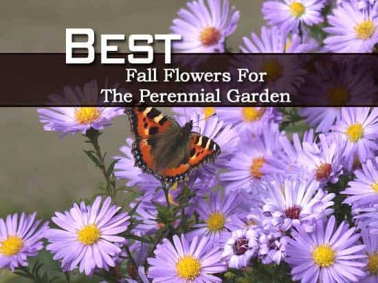 Page not found plant care today for Popular fall flowers