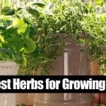 10 Best Herbs for Growing Indoors