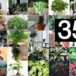 35 of the Best Indoor Plants For Your Home!