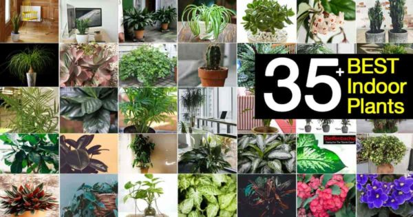 collection of the best indoor plants
