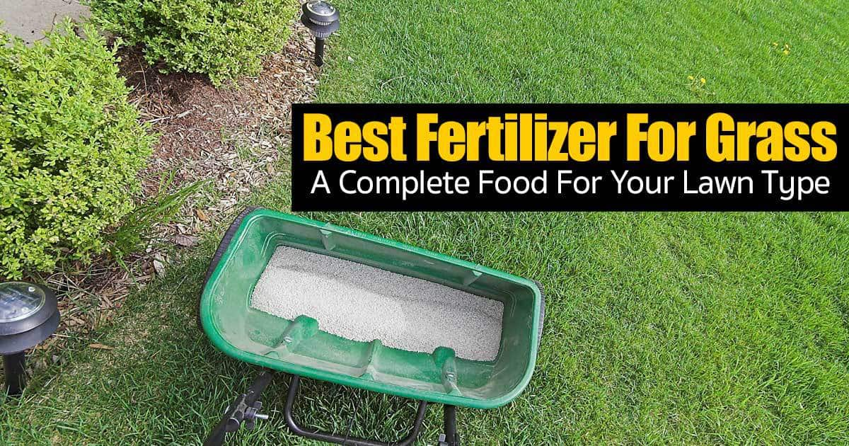 Best fertilizer for grass a complete food for your lawn for Best grass for garden