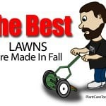 The Best Lawns Are Made In Fall