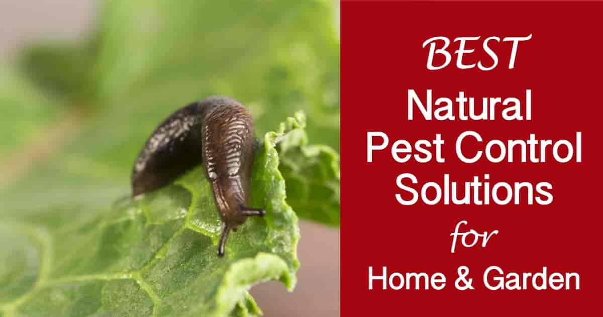 natural pest control solutions