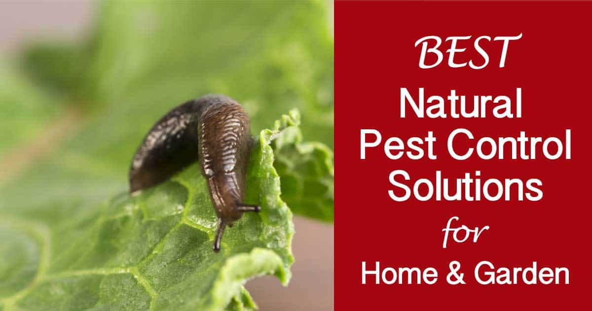 Our Best Natural Pest Control Solutions For The Home And Garden -