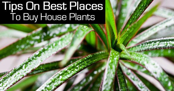 buying plants online or at the nursery always look for quality