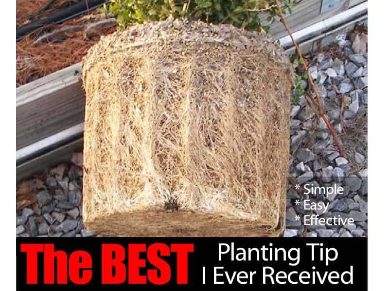 planting tip