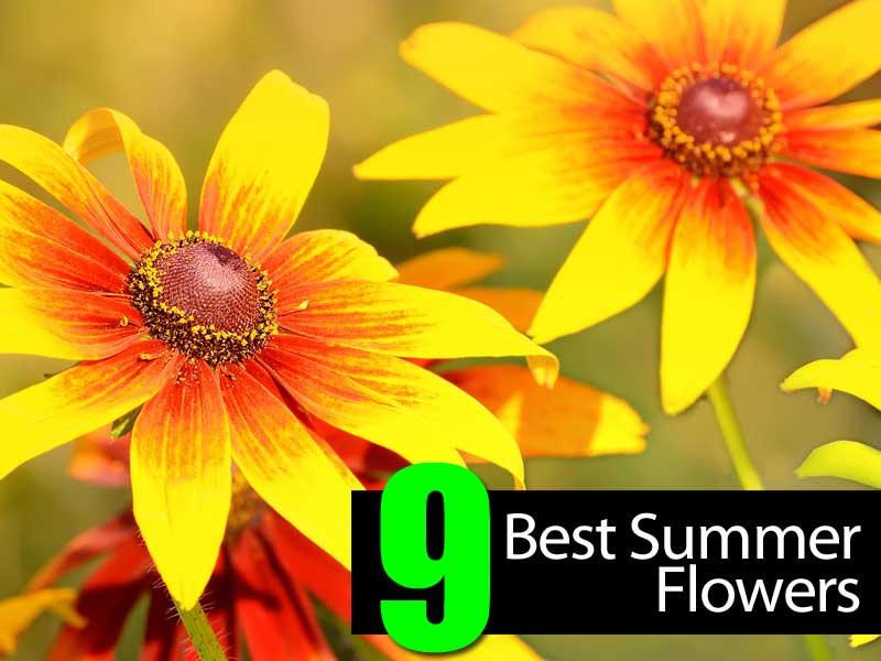 best-summer-flowers-063014