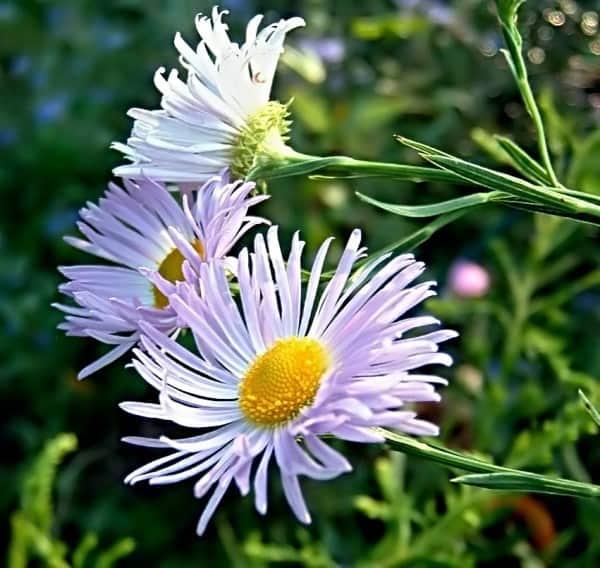 11 coloridas flores de verano que luchan contra el calor