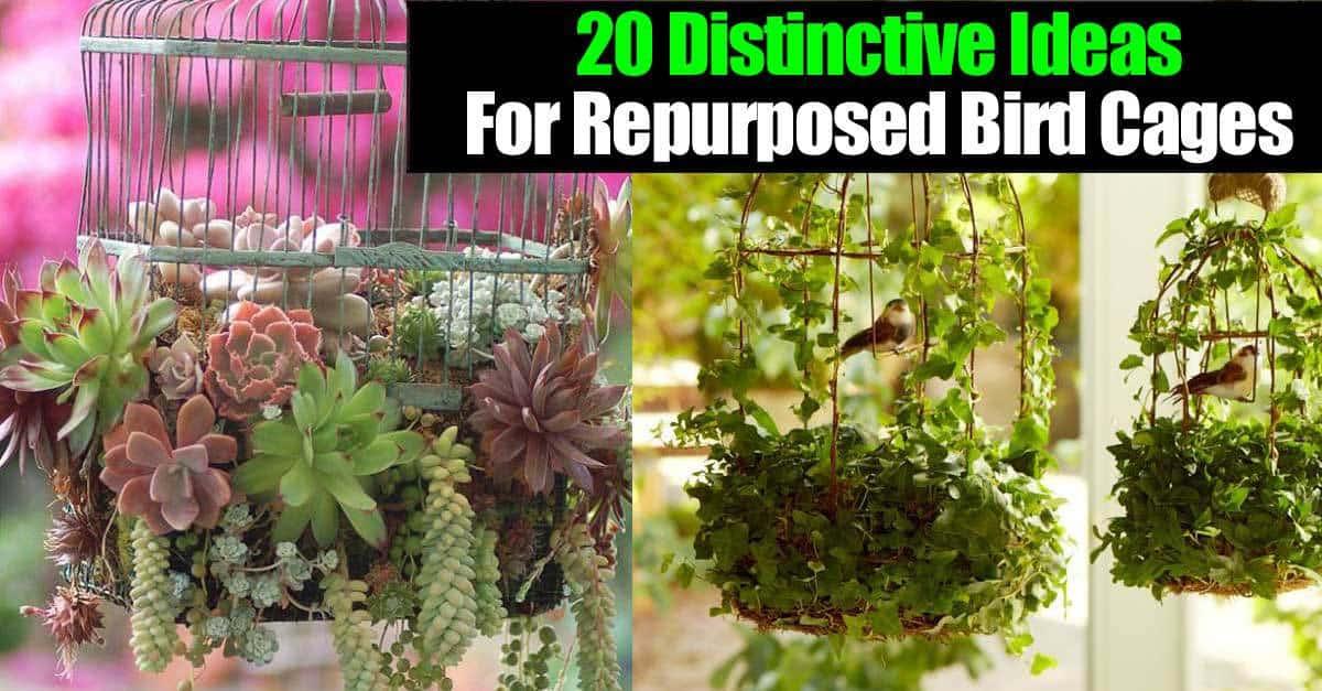 20 Distinctive Ideas For Repurposed Bird Cages