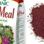 Blood Meal Fertilizer: What Is It And How To Use It In The Garden