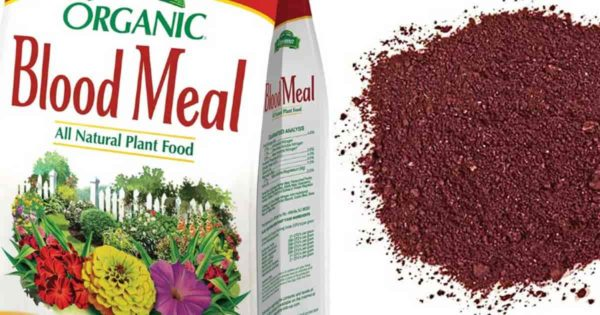 bag of dried blood meal