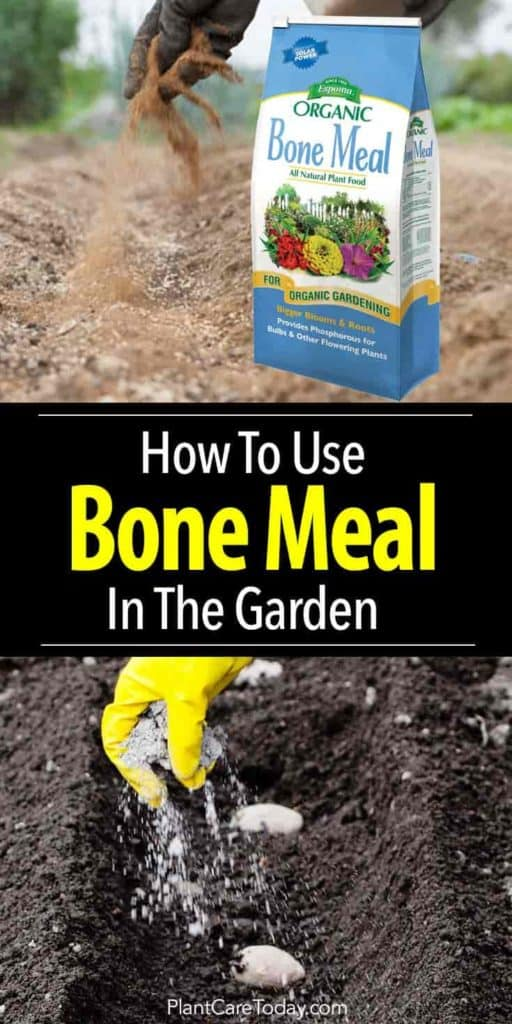 using bone meal in the garden also helps flowering plants