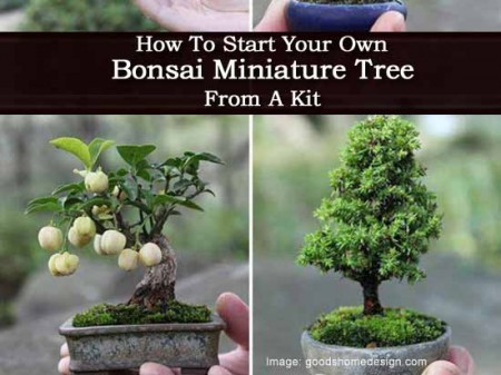 How To Start Your Own Bonsai Miniature Tree From A Kit