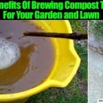 Making Compost Tea: What Is It and How Do You Use It?