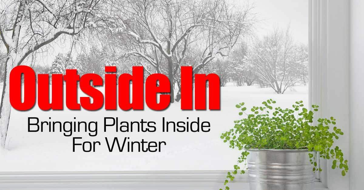 bring-plants-in-winter-093014