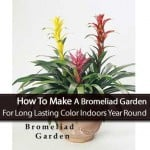 Bromeliad Garden: [HOW TO] Enjoy Long Lasting Color Indoors Year Round
