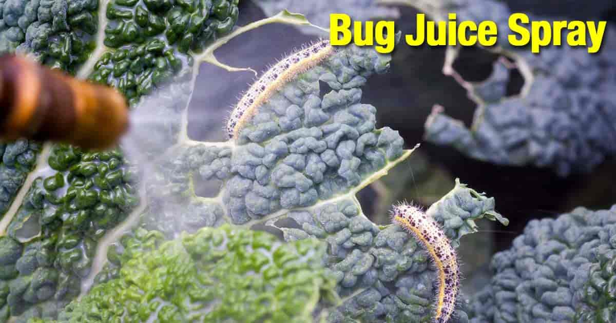 worms on kale sprayed with blended bug juice