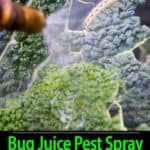 Bug Juice Natural Pesticide Spray – Using Bugs To Repel Bugs