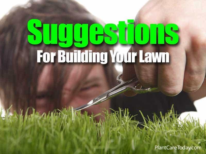 building-lawn-083114