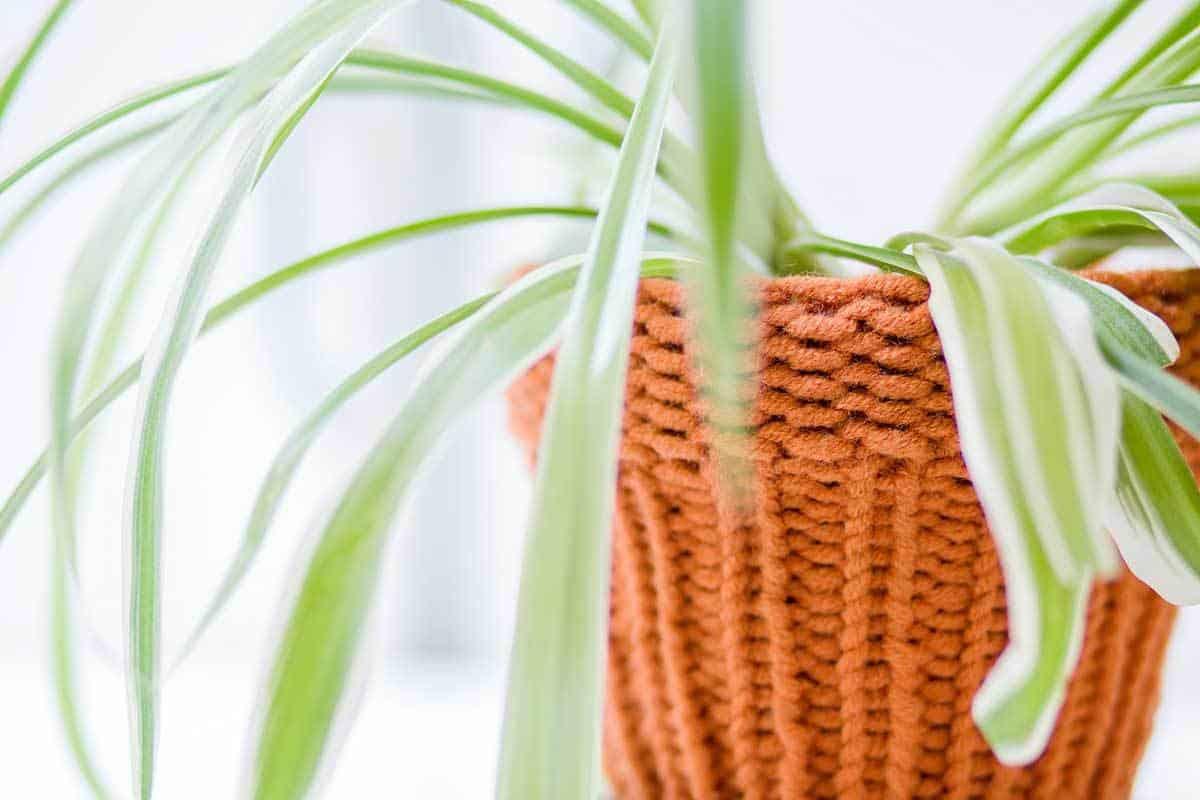 cachepot-basket-03-11302016