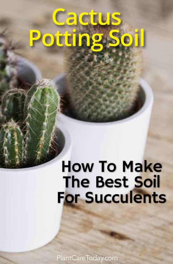 Homemade Cactus Soil Mix How To Make A Quality Potting Soil For Cacti