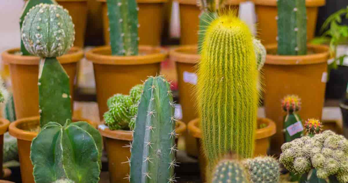 Cactus Propagation Of Orted Collection
