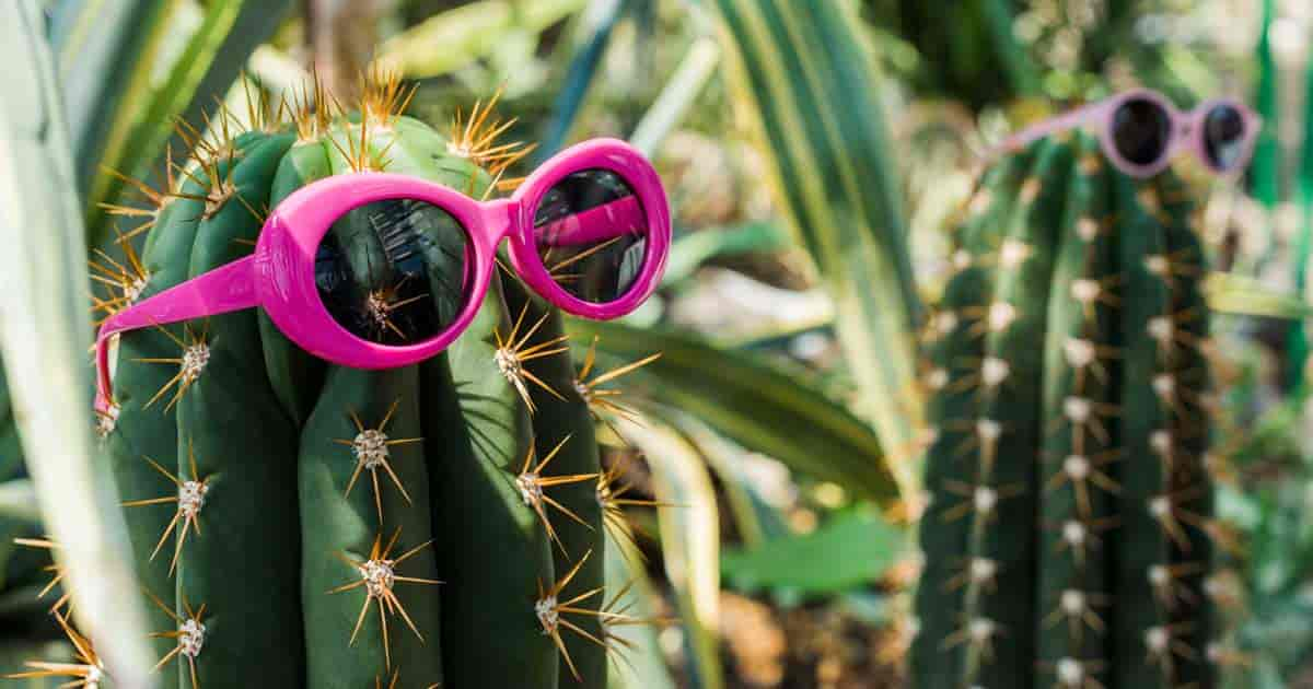 cactus with sunglasses