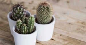 How To Make The Best Cactus Soil Mix