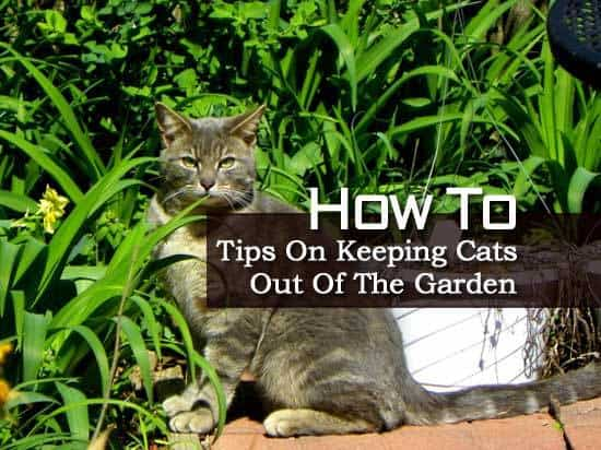 How To Prevent Cats From Gardens Best Cat Wallpaper Collection 2017