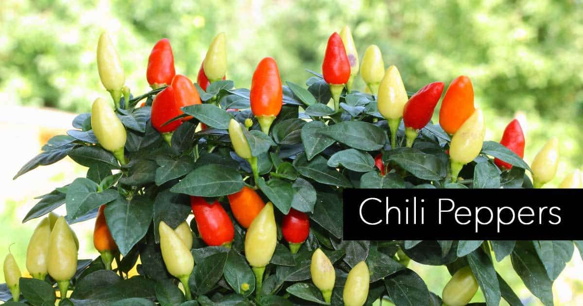 chili-peppers-07312016