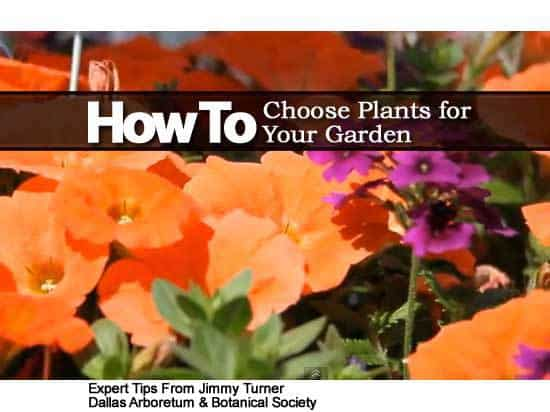 How to choose plants for your garden video for Choosing plants for landscaping