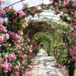 Landscaping A Rose Garden – Choosing Garden Roses for Your Landscape