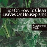 [Top Tips] How To Clean Leaves On Houseplants