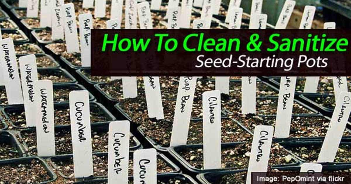 clean-starting-pots-01312016