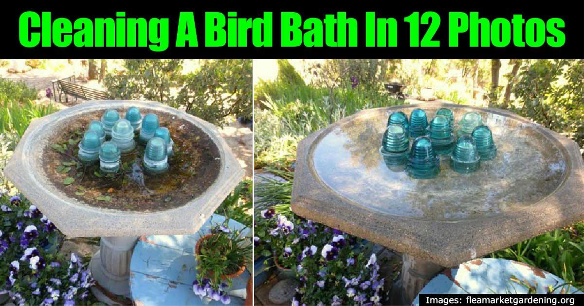 Cómo construir un baño de aves caseras