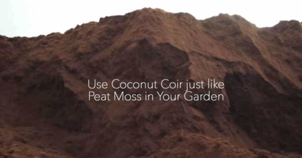 Use Coconut Coir just like Peat Moss in Your Garden