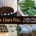 5+ Uses For Coffee Filters In The Garden