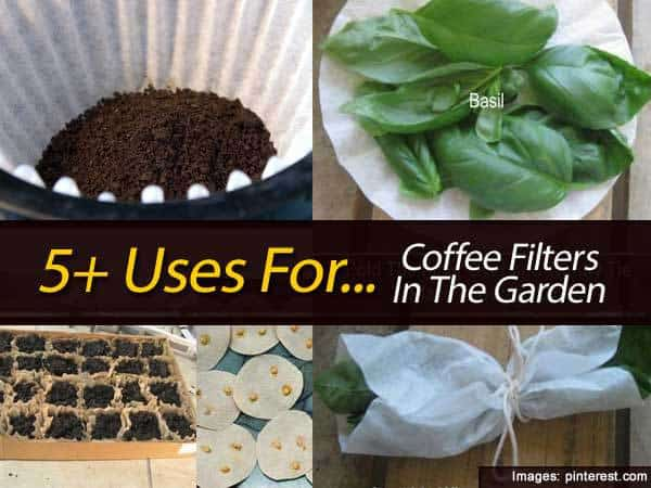 5 uses for coffee filters in the garden - Coffee Filter Uses