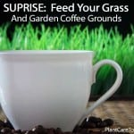 SUPRISE: You Can Feed Your Grass & Garden Coffee Grounds!