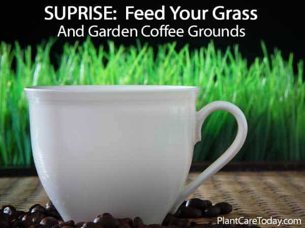 used coffee beans are good for grass and the garden