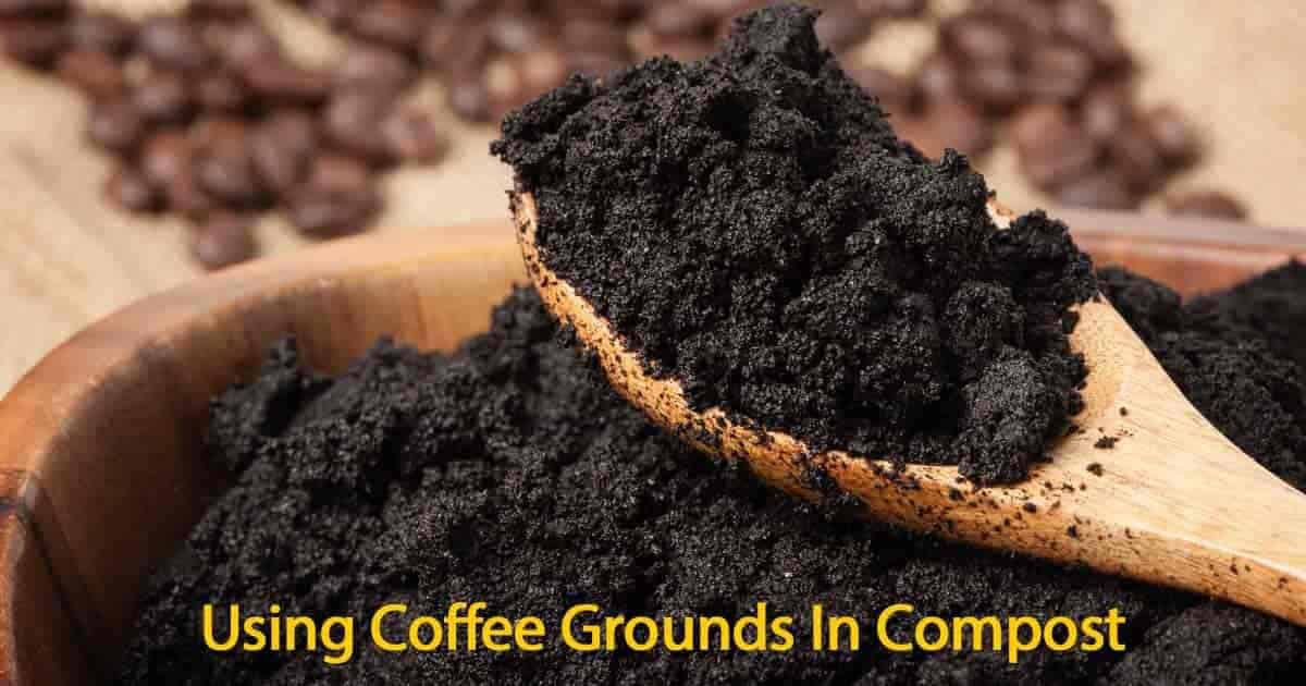used coffee grounds in compost to build the soil