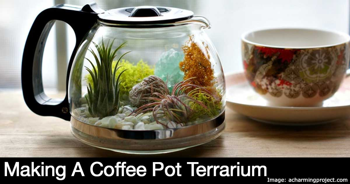 coffee-pot-terrarium-22820151209