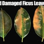 Cold Hardy Tropical Plants – Effects of Cold Temperatures on Plant Growth
