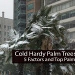 Cold Hardy Palm Trees: 5 Factors and Top Palms