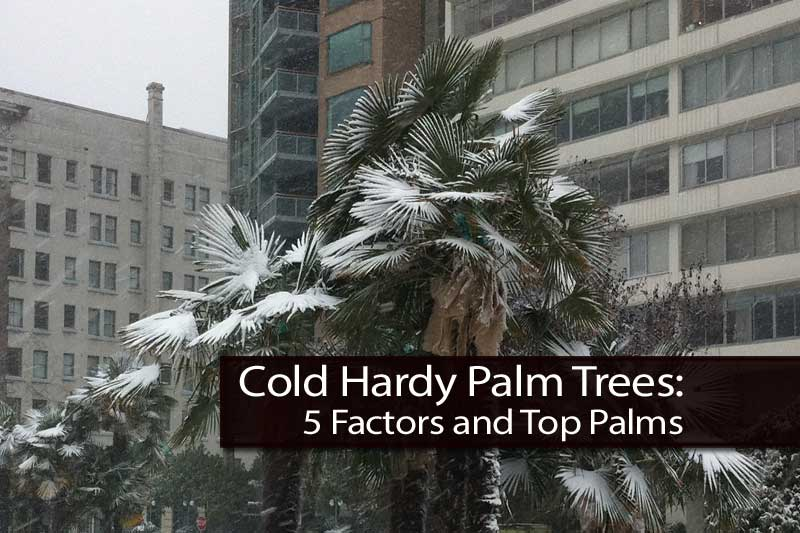 cold-hardy-palms-103113