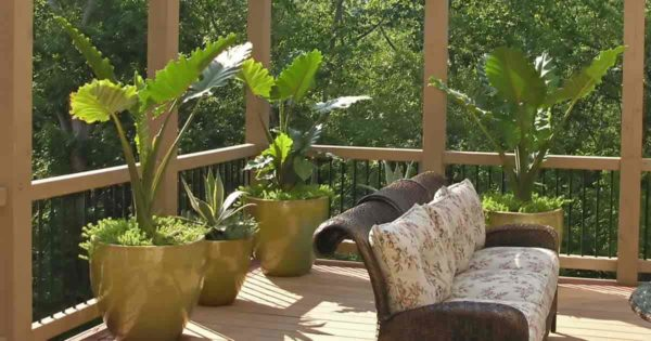 Potted colocasia on patio deck