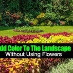 How To Add Color To The Landscape Without Using Flowers