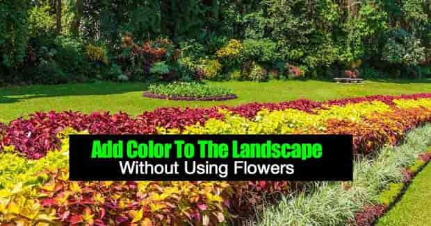 add color to the landscape without flowers